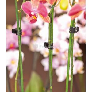Orchideeenclips