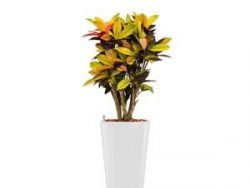 Standard All in 1 Hydrocultuur Croton iceton rond wit