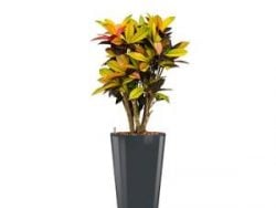 Standard All in 1 Hydrocultuur Croton iceton rond antraciet