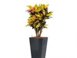 Standard All in 1 Hydrocultuur Croton iceton vierkant antraciet