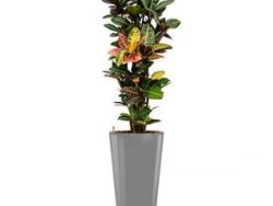 Standard All in 1 Hydrocultuur Croton petra rond zilver