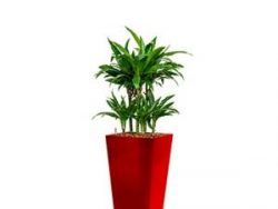 Deluxe All in 1 Hydrocultuur Dracaena janet craig vierkant rood
