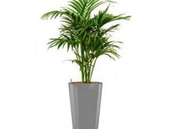 Deluxe All in 1 Hydrocultuur Kentia palm forsteriana rond zilver