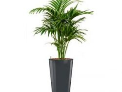 Deluxe All in 1 Hydrocultuur Kentia palm forsteriana rond antraciet