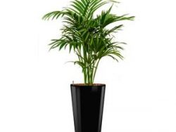 Deluxe All in 1 Hydrocultuur Kentia palm forsteriana rond zwart