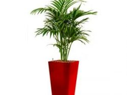 Deluxe All in 1 Hydrocultuur Kentia palm forsteriana vierkant rood