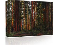 Sound Art Canvas + Bluetooth Speaker Trees In The Forest
