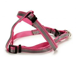New Comers Strap Strepen (2